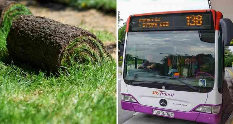 Pour refroidir leurs autobus, les villes de Singapour et Madrid végétalisent les toits des véhicules