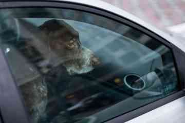 Briser une vitre de voiture pour sauver un animal en cas de canicule : Est-ce légal ? Quels sont les risques juridiques ?