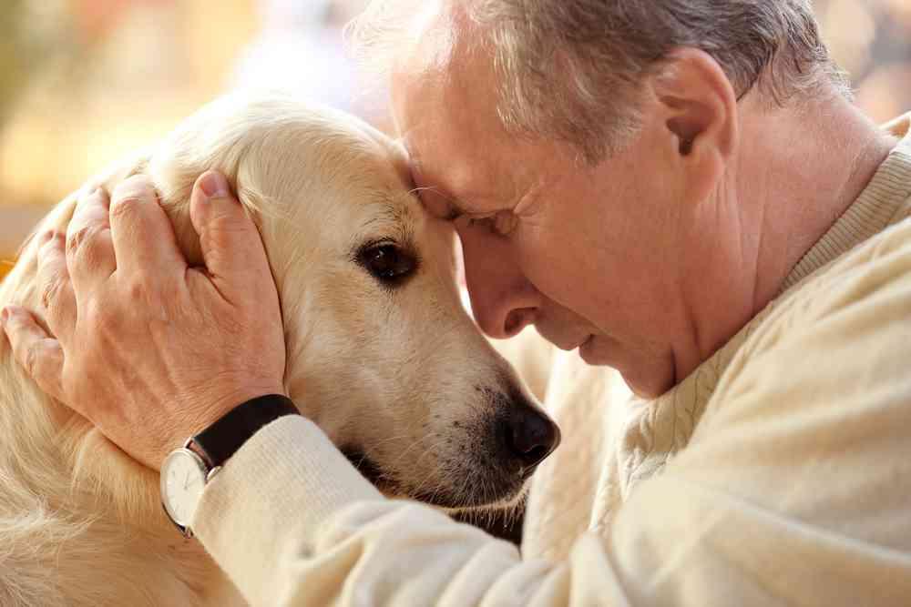 Confier des chiens du refuge aux personnes âgées, l'idée géniale de la ville de Cambrai