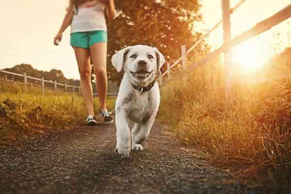 WOOG, l'application dédiée aux balades canines