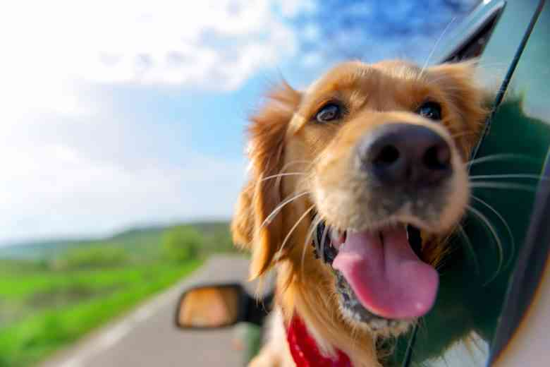 Uber Pet : une fonctionnalité pour se déplacer avec un animal de compagnie