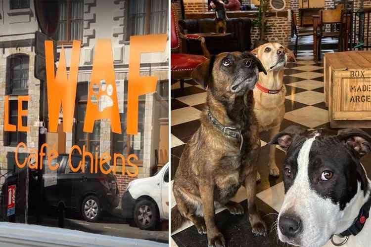 """Waf : dans ce café """"refuge"""" de Lille vous pouvez adopter un chien abandonné"""