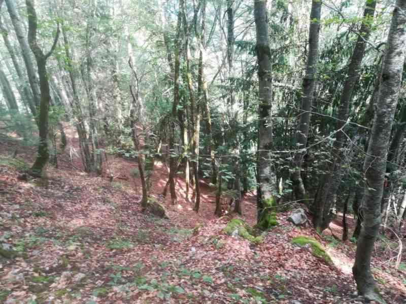 Haute Savoie : une nouvelle cagnotte pour acquérir une forêt à Thônes afin d'y interdire la chasse