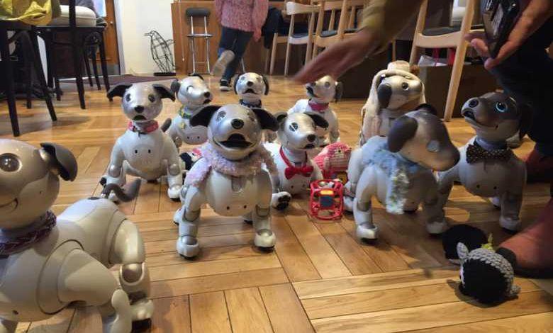Japon : ce café de Tokyo organise des soirées à thème pour les propriétaires de chiens robots...