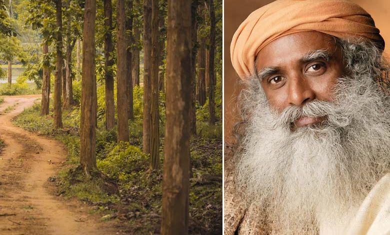 Pour faire reculer le désert, un maître yogi mobilise des milliers de volontaires pour planter 114 millions d'arbres