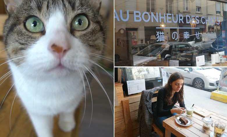 Dans Ces Bars Et Librairies Refuges Vous Pouvez Adopter Un Petit Chat Neozone