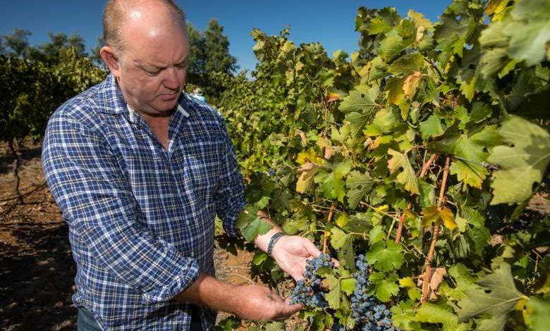 Le réchauffement climatique menace 85% des régions viticoles