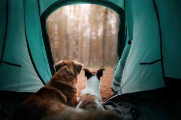 La Rochelle : le maire ouvre le camping municipal aux SDF et à leurs animaux !