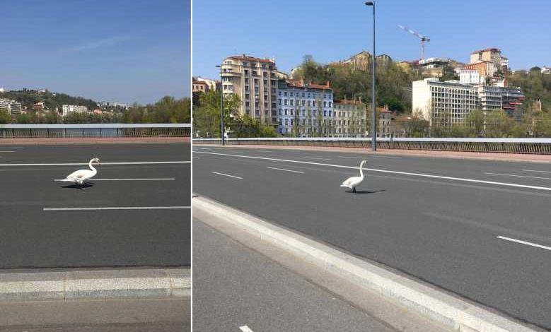Lyon, Paris, San Francisco, les animaux investissent les villes