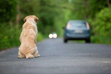 Nous sommes le 27 juin, Journée Mondiale Contre l'Abandon des animaux de compagnie