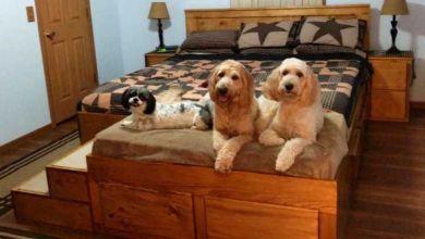 Un américain construit des lits un peu spéciaux... avec une partie réservée à vos animaux !