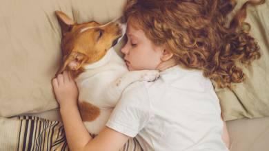On vous donne 5 bonnes raisons de laisser votre chien dormir auprès de vous !