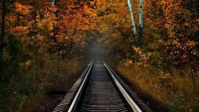 Photo de Saviez-vous qu'il existait une «gare fantôme» au coeur de la Forêt de Fontainebleau ?