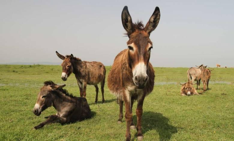 Espagne: quand les ânes aident les soignants à destresser
