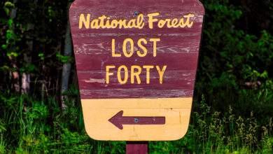 Lost 40 : la forêt ancienne préservée grâce à une erreur humaine