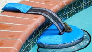 FrogLog, un ingénieux système qui permet d'éviter la noyade des animaux dans les piscines !