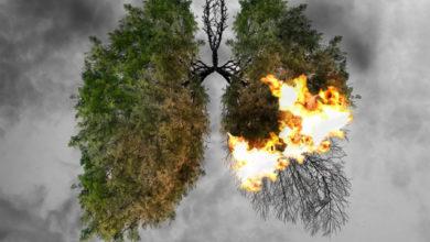 La forêt amazonienne est désormais une usine à carbone