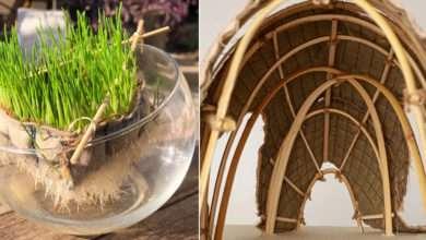 Living Shell : une étonnante petite maison construite à partir de plantes vivantes